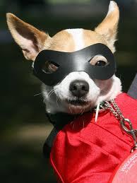 pets costumes halloween diy dog halloween costume caprict com