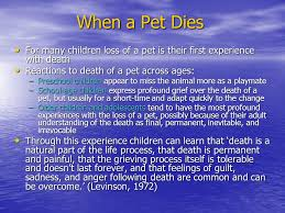when a pet dies dying and the child ppt online