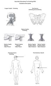 526 best body sense images on pinterest anatomy neuroplasticity