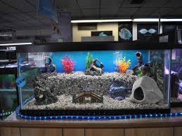 I like the different levels in this aquarium