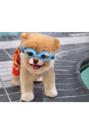 50 best dog days of summer images on pinterest dog pools