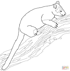 tree kangaroo coloring page free printable coloring pages