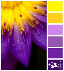 Purple Color Purple Yellow Burst Purple Lilac Yellow Designcat Colour