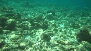 Recensioni Bravo Alimatha by Snorkeling Ad Alimatha Squalo Pinna Nera Youtube