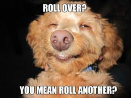 Stoned Meme - stoned dog memes are so hot right now gallery worldwideinterweb