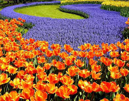 133 best flowers images on pinterest flowers flowers garden and
