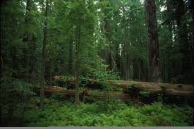view of forest habitat royalty free stock photograph in gallery