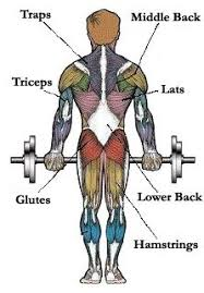 Muscles Used During Bench Press Map Of Muscles Pick Exercises For Different Muscle Groups