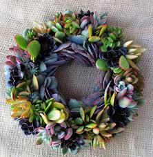succulent wreath succulent solutions home
