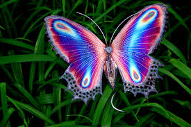 butterfly grass elegant photoshop photography free download vector
