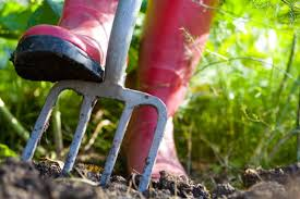 spring gardening chores davies u0026 partners