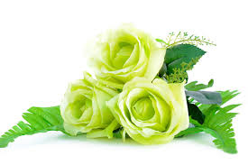 green roses color meanings that ll help you express the right feelings