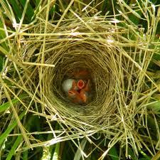 Audubon Backyard Bird Count by Citizen Science U2014 Madison Audubon