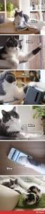 best 25 funny cats ideas on pinterest funny kittens funny cat