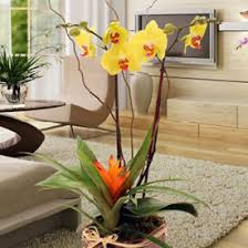 orchids care phalaenopsis orchids indoor flowers plant care rocket farms