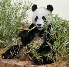 fedex thanksgiving the fedex panda express china to scotland