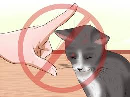 3 ways to prepare your cat for a new baby wikihow