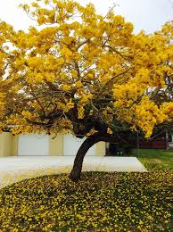 9 best best tree with flower images on singapore