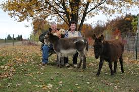 mike and pam mcgroarty with their miniature donkeys finnegan and