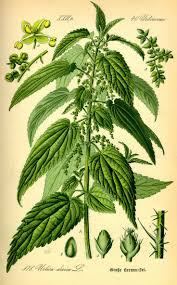 458 Best Gardening Medicinal Plants Images On Pinterest Herbal