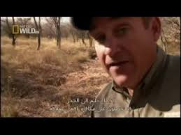Animal Planet Documentary Grizzly Bears Full Documentaries - animal planet 2017 wildlife animals beauty of snake discovery
