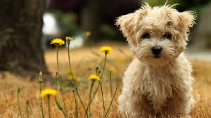 cute dog wallpapers dog wallpapers hd wallpaper wiki