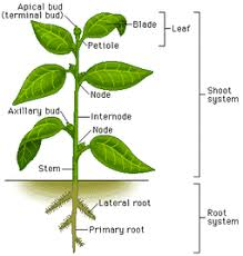 yr9 topic 5 plant structure and photosynthesis amazing world of