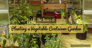 easy steps to growing vegetables in a small space container
