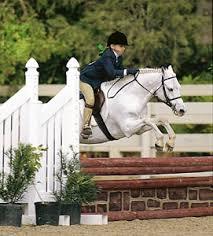 How To Tell If A Horse Is Blind Show Jumping Equestrian Event Britannica Com