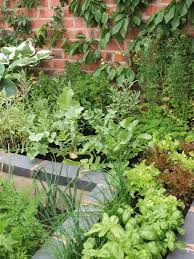 178 best potager plant combinations images on