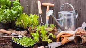 8 home gardening tips u0026 ideas to grow more u0026 reduce waste