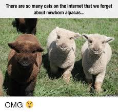 Alpaca Memes - 25 best memes about newborn alpaca newborn alpaca memes