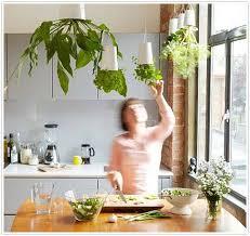 Urban Herb Garden Ideas - homemade indoor herb garden gardening ideas