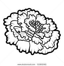marigold flower stock images royalty free images u0026 vectors
