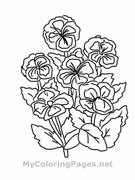 flower vines coloring page wild printable pages for kids images of