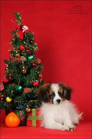 455 best christmas dogs images on pinterest animals christmas