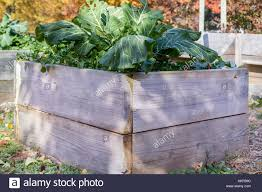 boxes of green vegetables stock photos u0026 boxes of green vegetables