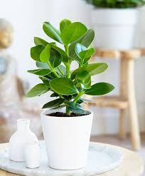 Ikea Plant Ideas by Best 25 Clusia Ideas Only On Pinterest Seed Pods Seeds And