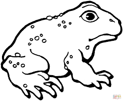 american toad 3 coloring page free printable coloring pages