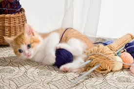 injuries in cats symptoms causes diagnosis treatment
