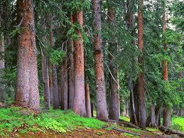 Colorado forest images Colorado photos colorado landscape photography jpg