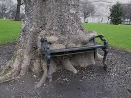 the hungry tree that eats park benches youtube