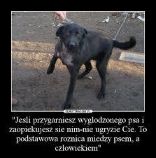 si e psa jesli przygarniesz wyglodzonego psa i zaopiekujesz sie nim nie