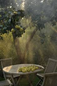 Apple Tree In My Backyard Best 25 Apple Orchard Ideas On Pinterest Orchards Fruit Tree