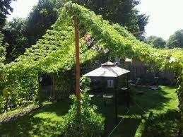 hop growing bader wine supply