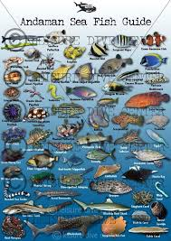 84 best fish identification images on tropical