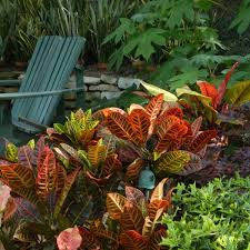Tropical Landscaping Ideas by Top 25 Best Tropical Plants Ideas On Pinterest Tropical Garden