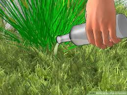 How To Cut Weeds In Backyard How To Get Rid Of Foxtails 12 Steps With Pictures Wikihow