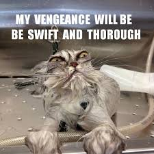 top 20 funniest angry cat memes