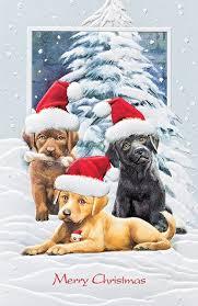 pumpernickel christmas cards pumpernickel press boxed christmas cards card sets
